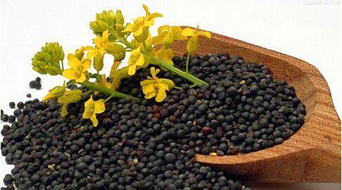 物性分析仪(质构仪)用于油菜籽粒压缩特性的研究