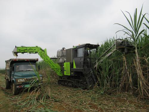 崇左市农机局深入田间地头、制糖企业为甘蔗机械化收获服务组织排忧解难