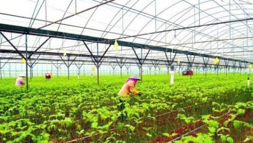 江苏省农机具开发应用中心组织春季设施蔬菜机械化生产试验