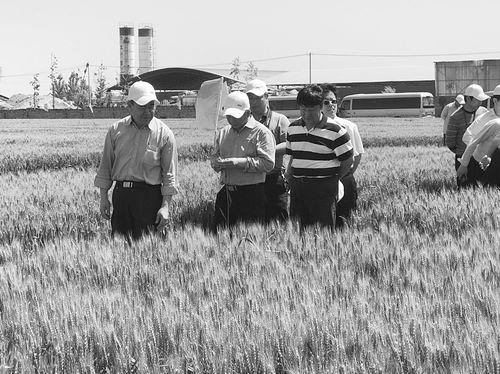 全产业链提质增效 华北小麦绿色发展