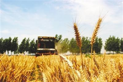 智能、高效、优质 三夏时节我国麦收新亮点