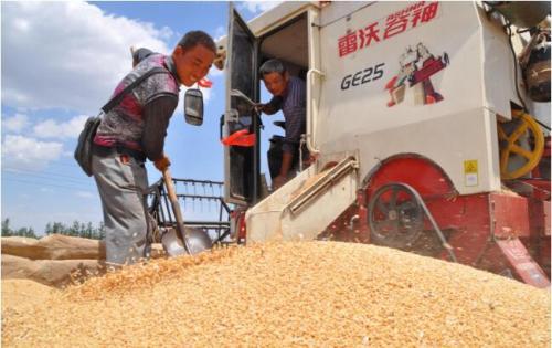 全国夏粮生产情况 播种面积减少单产下降
