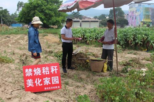 水稻收割大忙 港北农机禁烧秸秆在行动