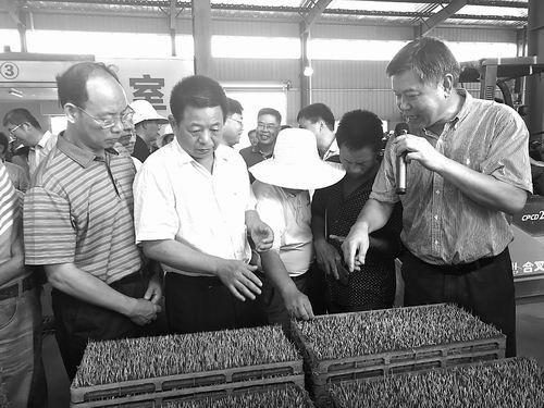 高科技轻简化 突破瓶颈助力双季超级稻生产
