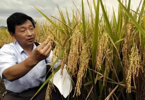1项农机领域成果有望获得2018年度国家科学技术进步奖