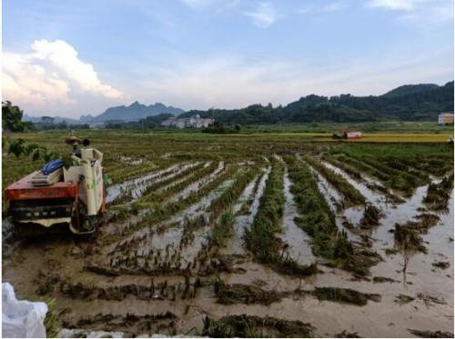 巴马县水稻联合收割机助力农机化事业