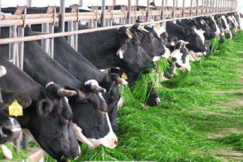 """中国农科院""""绿色技术""""推动奶业健康发展"""