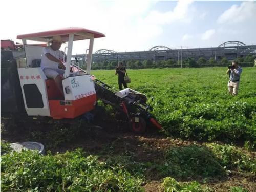 三秋生产将近 河南农民对花生收获机械化需求旺盛