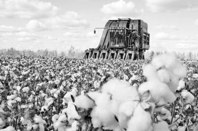中国棉花大动作--打造国际品牌!