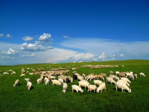 内蒙古:光伏科技打响草原扶贫攻坚战