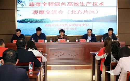 河北沧州:蔬菜全程绿色高效生产 现场观摩交流