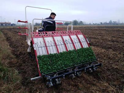 湖北探索油菜生产新方式 推进油菜生产全程机械化