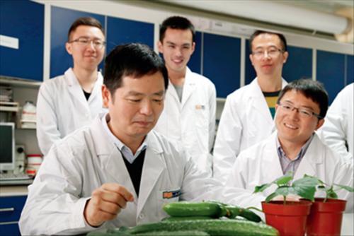 农业科研:黄三文团队尝了18万片黄瓜叶子