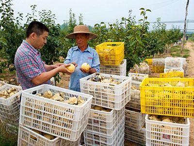 河南促农业产业化健康发展