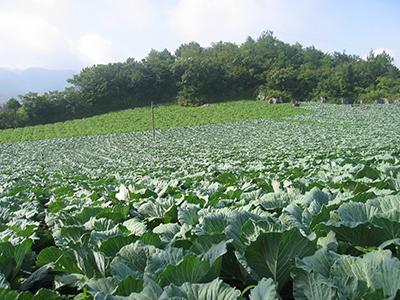 桂林将建3000亩现代农业示范区