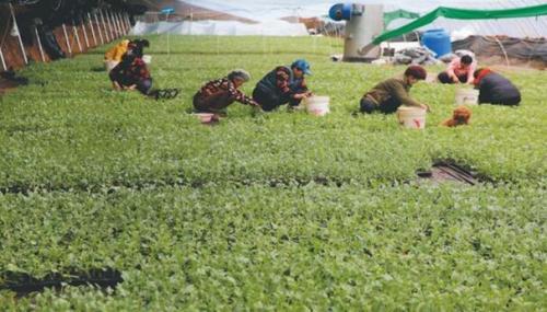 怀宁县种粮大户备战新一轮春耕生产