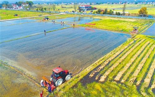 农民增收动能加快转换 如何爬坡越坎