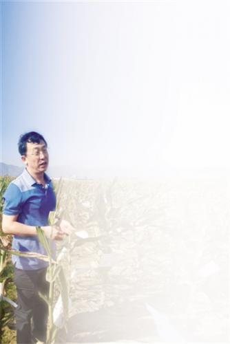 张春义:把高营养'装'进种子里