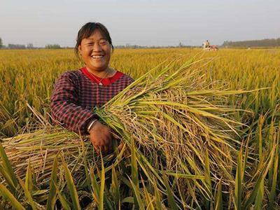 一文说尽水稻补贴新政策