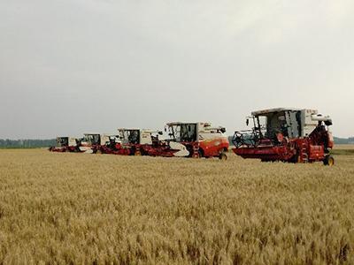 收得快 种得好 无人农机在田间大显身手