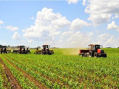 黑龙江建边农场玉米夏管为增收打基础