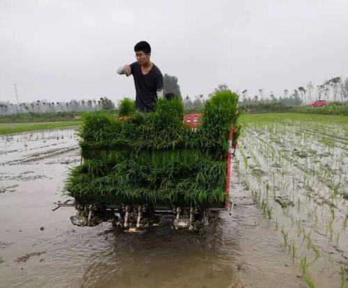 水稻長秧齡大苗同步開溝插秧機試驗成功
