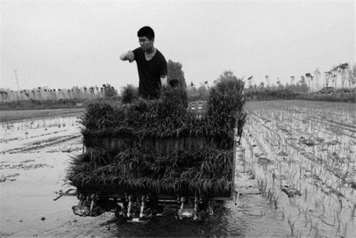 國內首臺水稻長秧齡大苗 同步開溝插秧機試驗成功