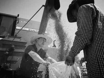 青岛首推小麦绿色高质高效集成技术模式