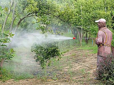 北京市投入亿元补贴农作物绿色防控