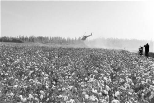 成立CCIA 中国棉花逆袭