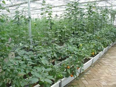 太原探索蔬菜产业生态发展之路