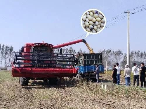2019年十大引领性uedbet官网技术 农机就有五个