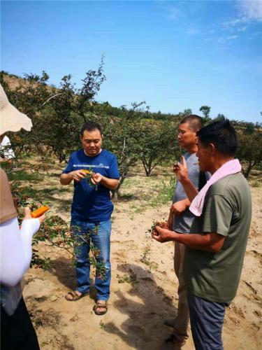 推广花椒釆果器,助力椒农生产