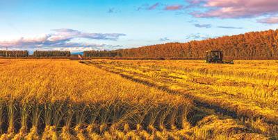力争到2025年农机总动力稳定在11亿千瓦