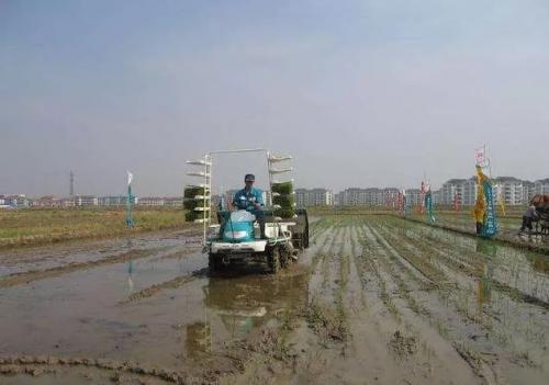 黑龙江多项水稻机械化技术示范效应杠杠的!