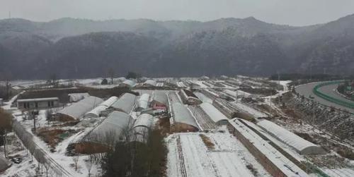 农技人员支招大棚蔬菜安全过冬
