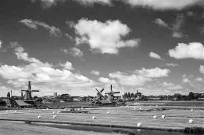 """""""家庭农场+合作社""""是荷兰农业的精髓"""