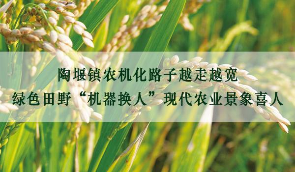 """陶堰镇<a href='http://www.sinofarm.net/' target='_blank'>农机</a>化路子越走越宽  绿色田野""""机器换人""""现代农业景象喜人"""
