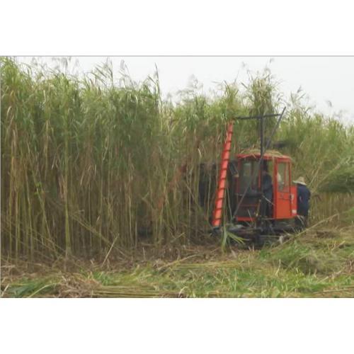 实用新型高效芦苇收割机