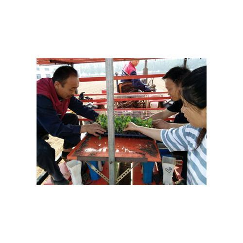 厂家直销各种蔬菜移栽机
